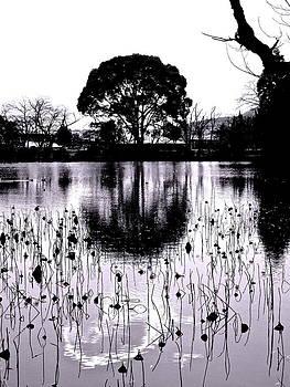 Larry Knipfing - Lotus Pond Winter - 1
