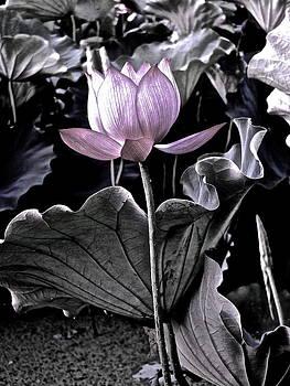 Larry Knipfing - Lotus Royalty - 3