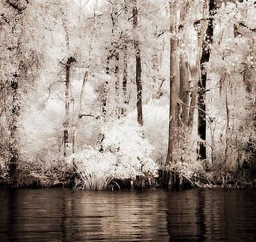 Louisiana Riverside by Beth Riser