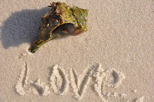 Love and Sea Shell by Vonda Barnett
