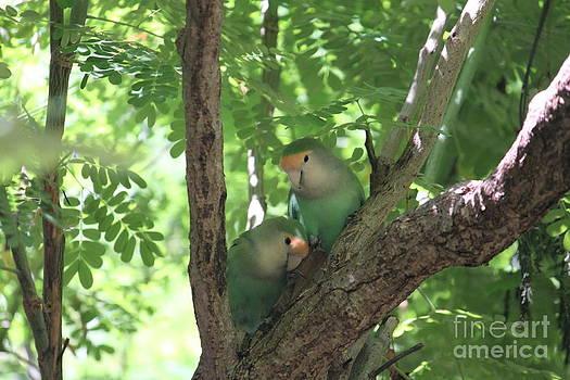 Love Birds by Sara Ricer
