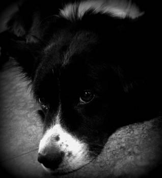 Love Dog by Megan Hughes