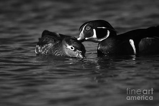 Love Ducks  by John F Tsumas