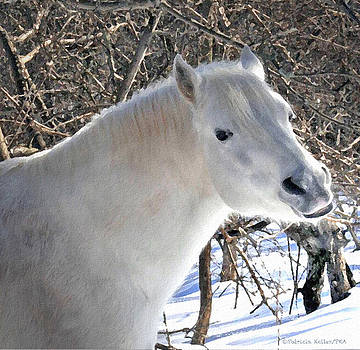 Love is...Paso Fino Stallion Smiles  by Patricia Keller