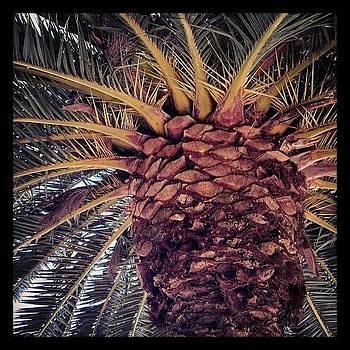 Love It! #sanfrancisco #palm by Larissa Holderness