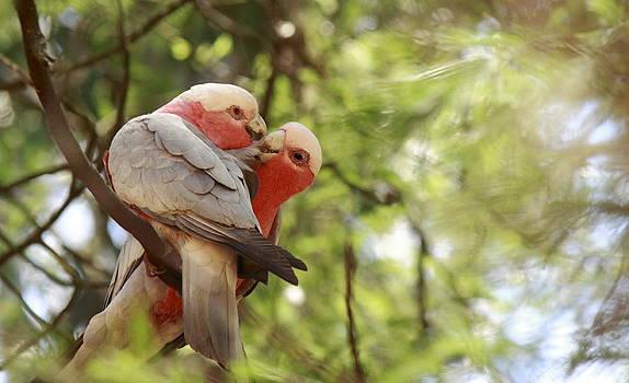 Love by Janaka Somaratne