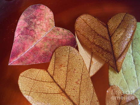Paddy Shaffer - Love Leaf Hearts Series 1