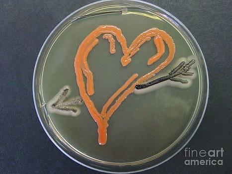 Niall Hamilton/Microbial Art - Love, Microbial Art