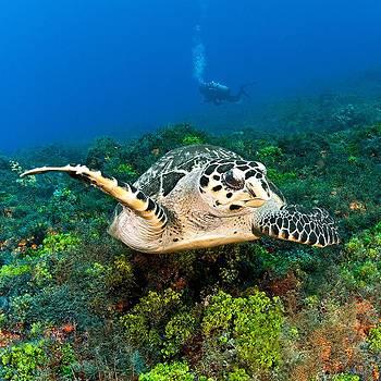Love My Turtles by Paula Marie deBaleau
