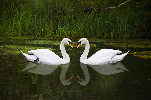 Love by Paul Howarth