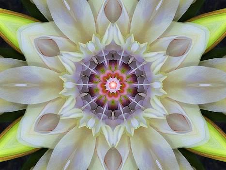 Love Star Flower Mandala by Diane Lynn Hix
