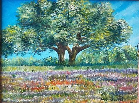Love Tree by Cristina Chavez
