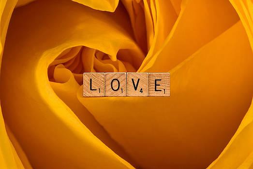 onyonet  photo studios - LOVE-Yellow Rose