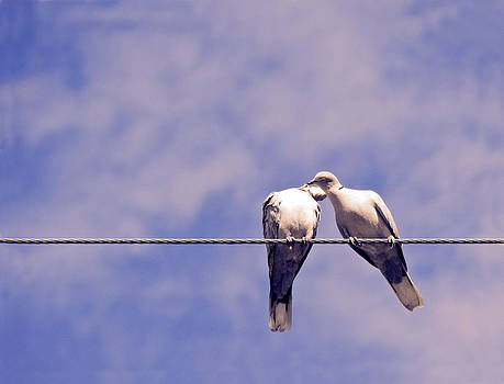 Stuart Brown - Lovebirds # 3