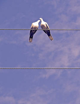 Stuart Brown - Lovebirds # 6