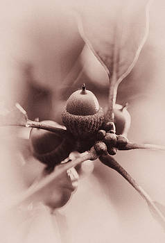 Lovely Acorns by Heather Bridenstine