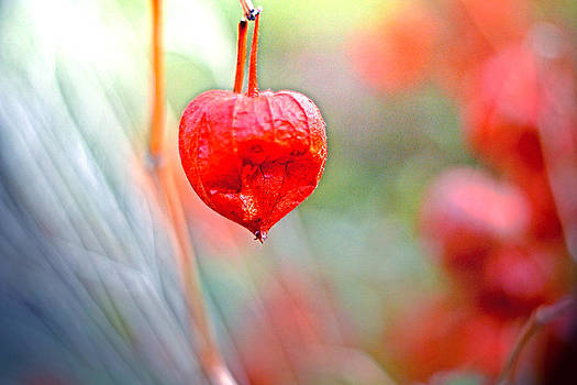Lovely Autumn colours by Nadeesha Jayamanne