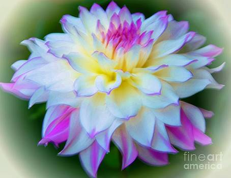 Lovely Dahlia by Kathleen Struckle