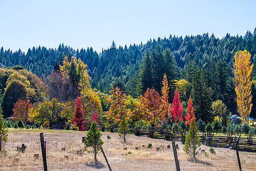 Lovely Fall Napa C.A. colors by Brian Williamson