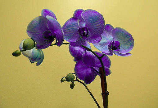 Christy Usilton - Lovely Orchid