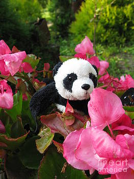 Ausra Huntington nee Paulauskaite - Lovely pink flower