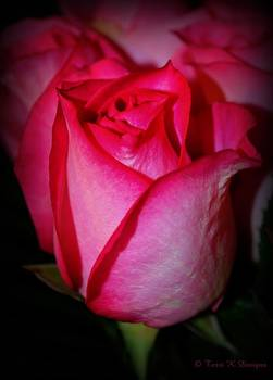 Lovely Rose by Terri K Designs
