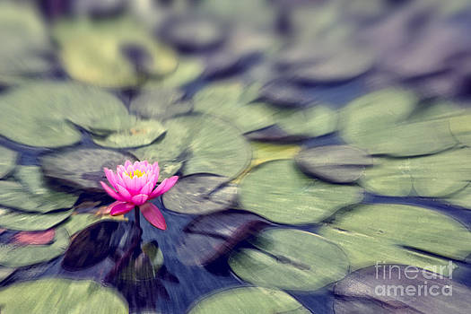 Beverly Claire Kaiya - Lovely Tranquil Pink Water Lily on Painterly Pond