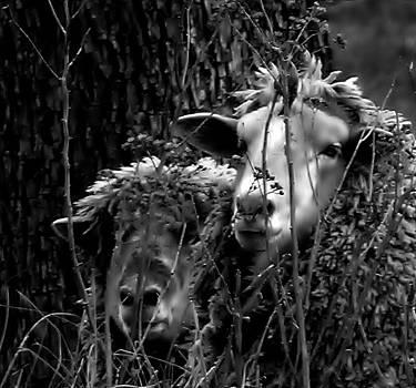 Lovers by Renee Oglesbee