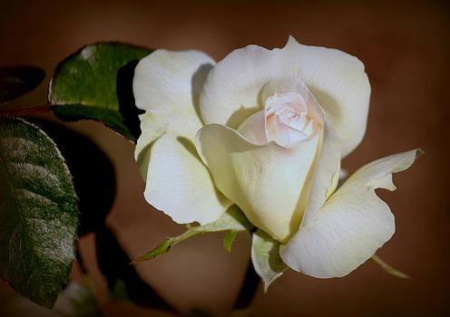 Rosanne Jordan - Loves Beginnings Rose