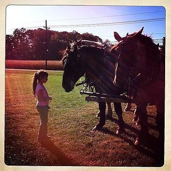 Loving The Belgium Horses From The by Deirdre Ryan