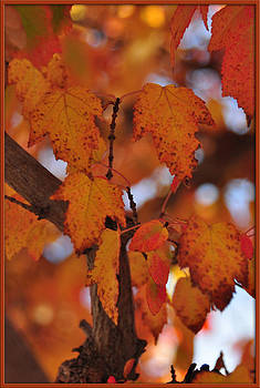 Loving the Fall Leaves by Mischelle Lorenzen