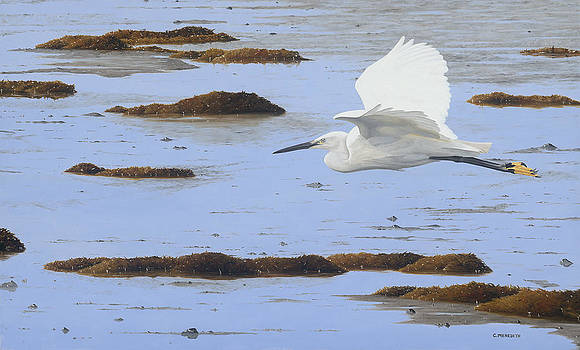 Low Tide-little egret by Clive Meredith