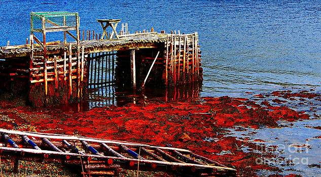 Barbara Griffin - Low Tide - Red Seaweed - Fishing - Moratorium