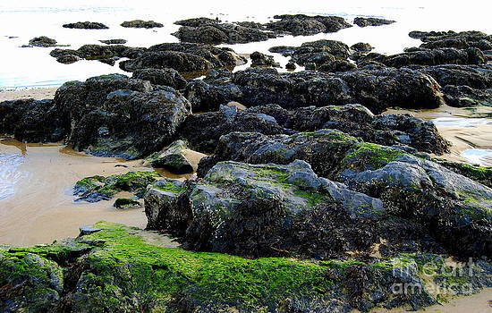 Low Tide Treasures by Eunice Miller