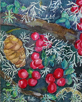 Lowbush Cranberries by Patricia Hooks