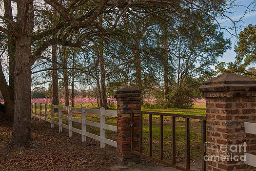 Dale Powell - Lowcountry Gates to Boone Hall Plantation