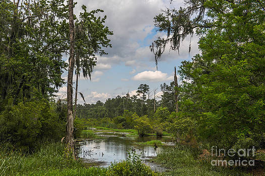 Dale Powell - Lowcountry Wetlands