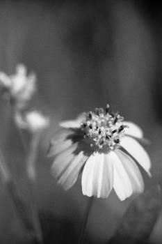 Loxahatchee Flower by Bradley R Youngberg