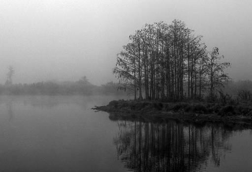 Howard Markel - Loxahatchee Fog
