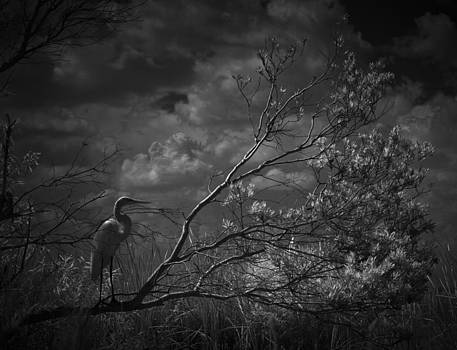 Loxahatchee Heron At Sunset by Bradley R Youngberg