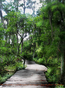 Loxahatchee National Wildlife Park by Judy Paleologos