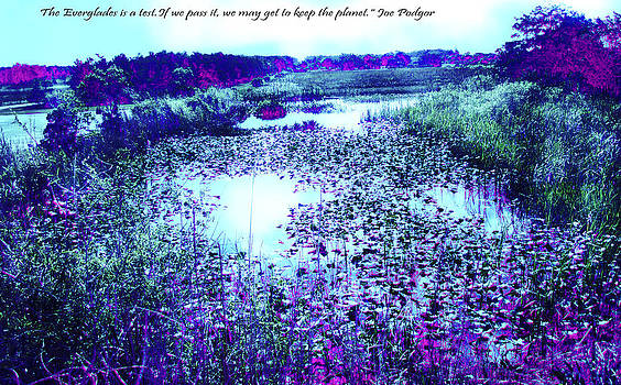 Loxahatchee Water Lilies 2 by Judy Paleologos