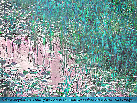 Loxahatchee Water Lilies by Judy Paleologos