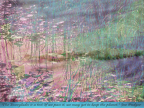 Loxahatchee Water Lilies with Alligator  by Judy Paleologos