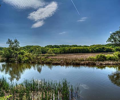 Lucien Morin Park Wetlands by Tim Buisman