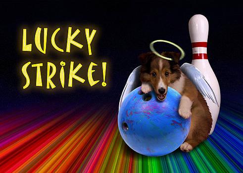 Jeanette K - Lucky Strike Sheltie Puppy