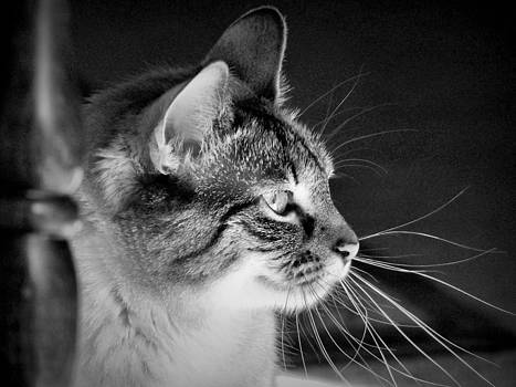 Lucy Window Light by  Garwerks  Photography