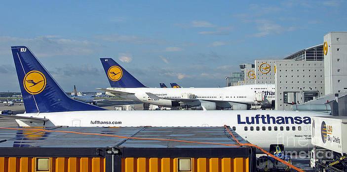 Lufthansa Birds At Frankfurt Airport by Ausra Huntington nee Paulauskaite