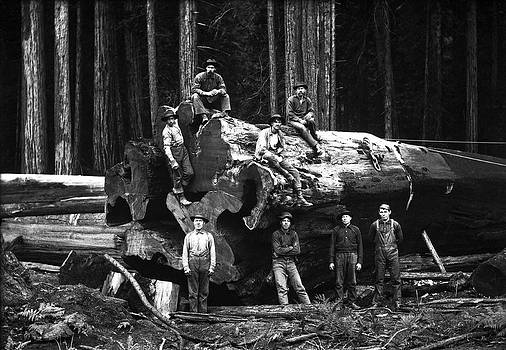 Daniel Hagerman - LUMBERJACK SEQUOIA LOG c. 1890