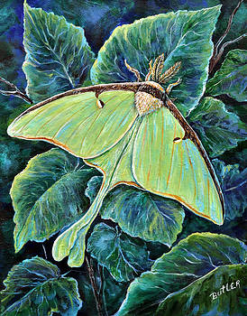 Luna Moth by Gail Butler